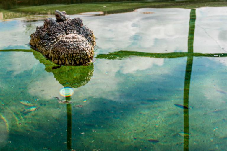 Green pool phosphate example